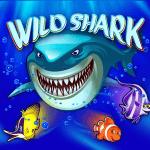 Wild Shark